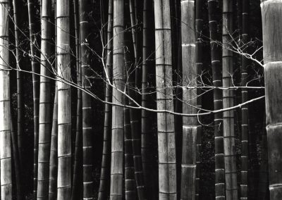 Bamboo Forest, 1970