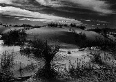 Yucca And Dunes, 1946