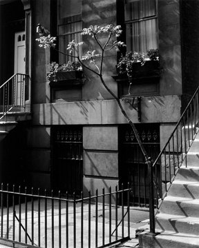 Brownstone in the Fifties, 1947
