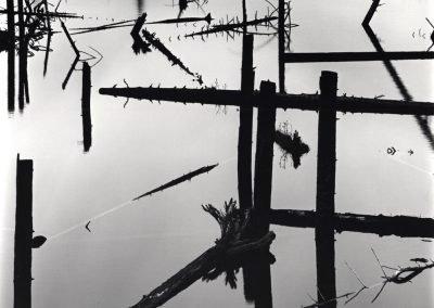 Log Pond, 1973
