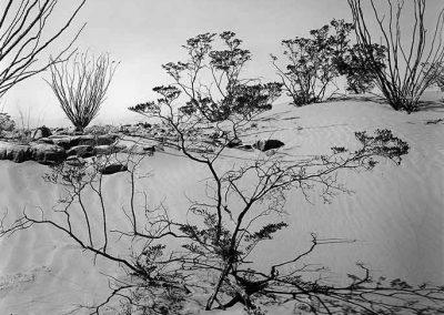 Texas Desert, 1946