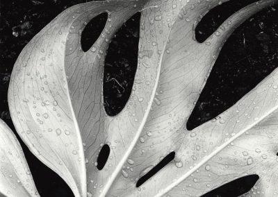 Sculptured Leaf, 1979