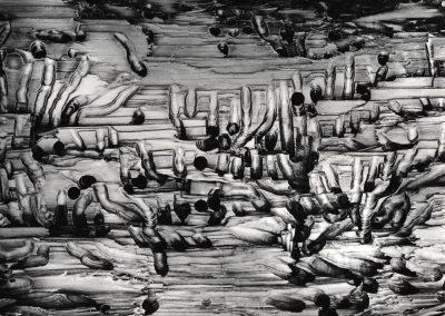 Worm Wood, 1973