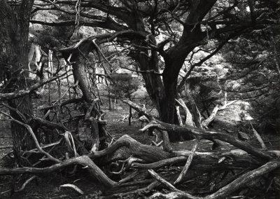Point Lobos, 1963