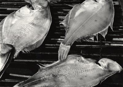 Fish, 1970