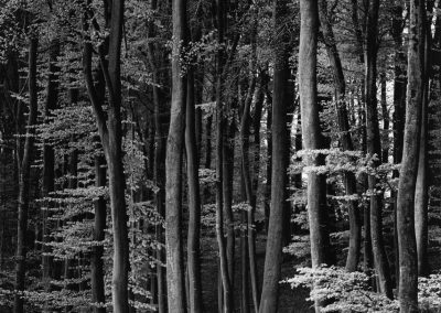 Forest, 1971