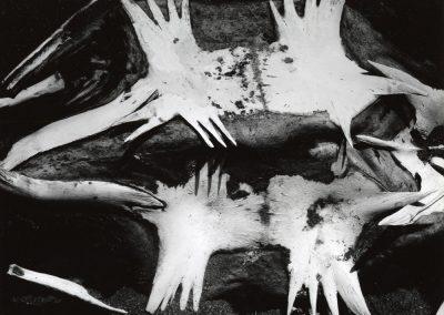 Turtle Skeleton, 1964