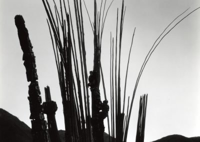 Cactus And Mountains, 1969