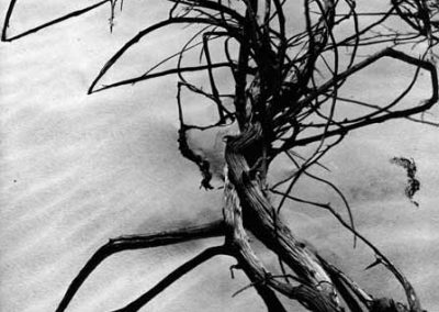 Sand And Tree Branches, 1975